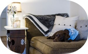 一つ買うだけでソファもベッドも手に入る!