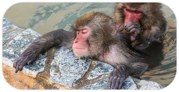 お風呂で寝る猿