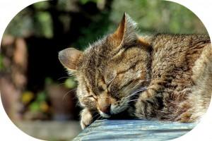 睡眠時間と睡眠の質い