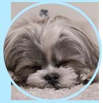 寝苦しいのは病気?安眠を妨げる主な原因と対処法とは