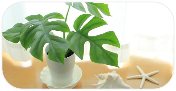 観葉植物のあるベッドテーブル