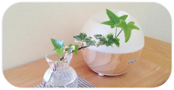 観葉植物と加湿器